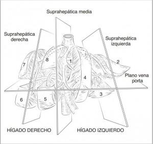 Divisiones del hígado