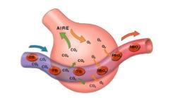 sintomas por acumulación de gases en el estomago