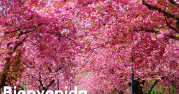 Primavera y salud